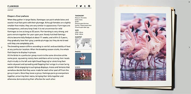 Sagami Act of Love web site - Flamingo