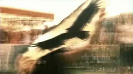 Eagle in Harrowdown Hill music video
