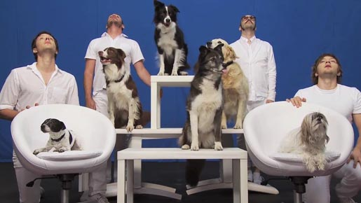 OK Go White Knuckles music video with dogs