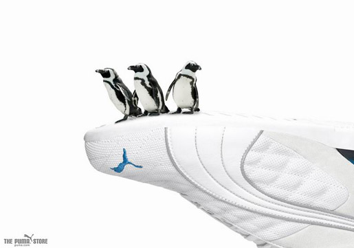 Puma Penguins