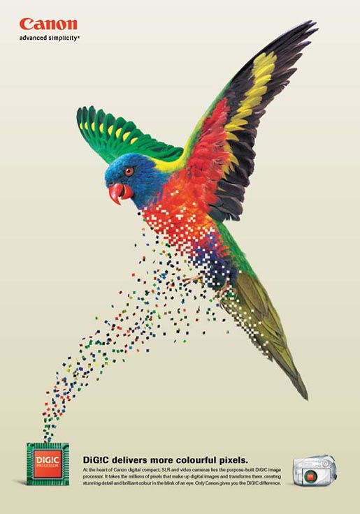 Rainbow lorikeet appears in Canon Digic print ad
