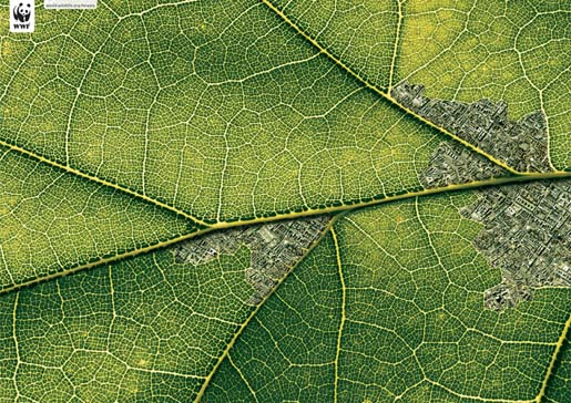 Leaf shows effects of human habitation on the Amazon forest