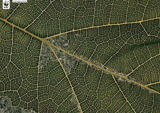 Leaf shows effects of human habitation on the Belize forest