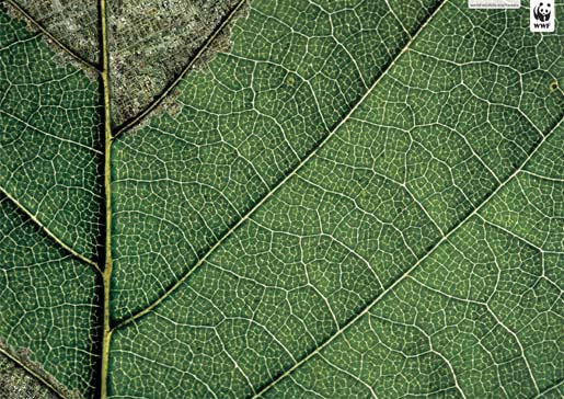 Leaf shows effects of human habitation on the Daintree forest