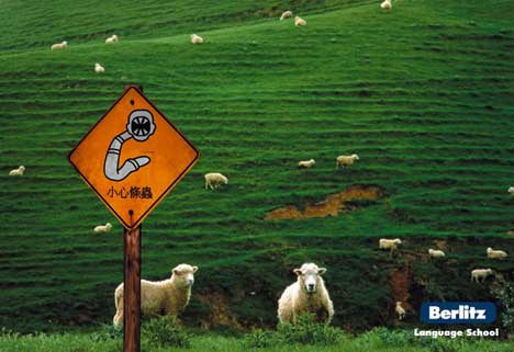 Sheep warning sign in Berlitz print advertisement