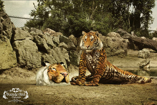 Tiger in tiger costume in Duende Azul print advertisement