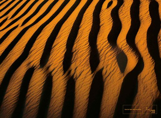 Tiger stripes in Desert print advertisement for Wildlife Trust of India