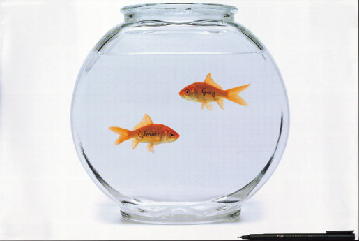 Pilot Goldfish named Gloria and Gary