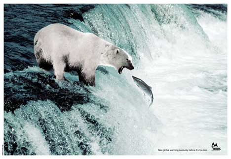 Polar bear catching salmon in global warming print advertisement