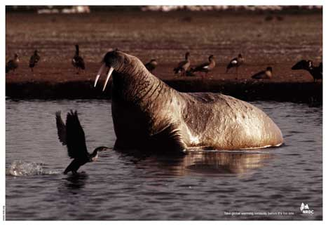 Sea lion and shag in global warming print advertisement