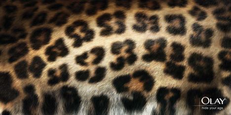53 hidden in Leopard skin design