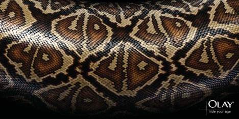 40 hidden in Snake skin design