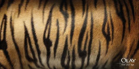 41 hidden in Tiger skin design
