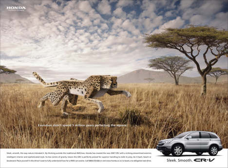 Honda CRV Shark print advertisement