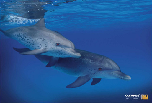 Red eyed dolphins in Olympus underwater camera print ad