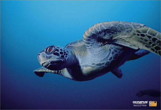 Red eyed turtle in Olympus underwater camera print ad