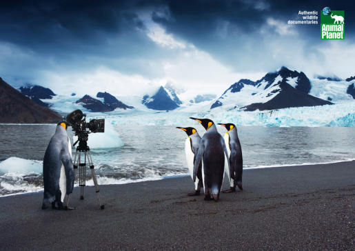 Animal Planet Penguins with camera