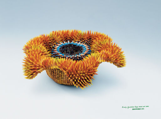 Greenpeace Asteridae print advertisement