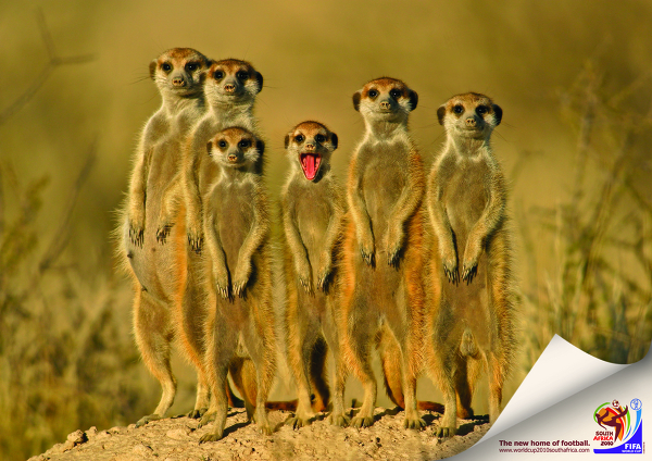 Red Meerkat A red tongue adds to the