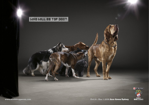 World Dog Games poster