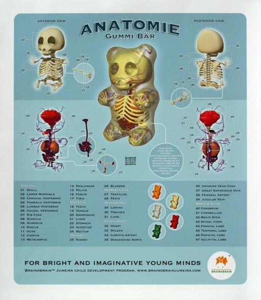 Brainobrain Gummi Bear Anatomy Schematics