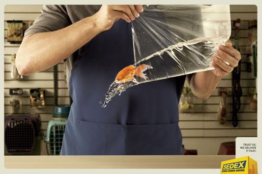 Sedex Fish print advertisement
