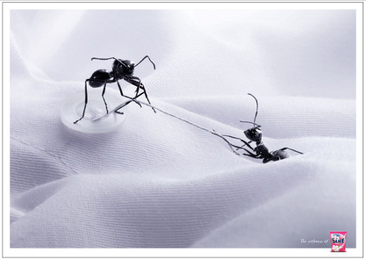 Surf Ants print advertisement