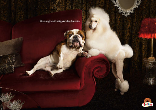 Frolic Bulldog and Poodle