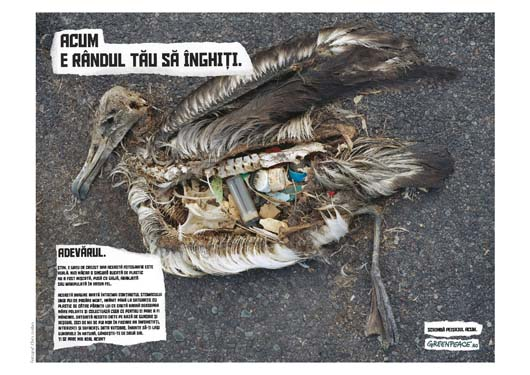 Greenpeace Birds Swallow print ad