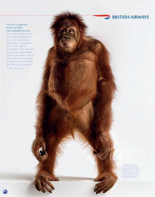 British Airways Orangutan