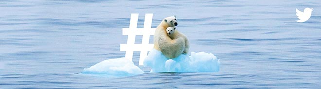 Twitter What's Happening - Polar Bears