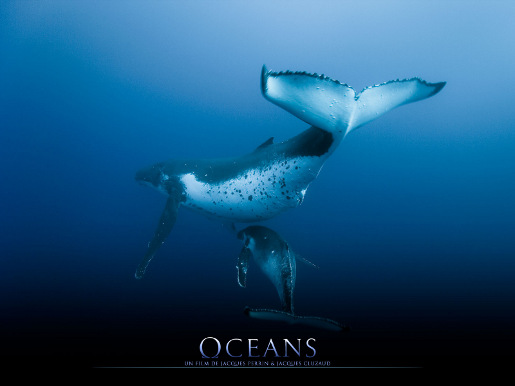 Oceans Whales