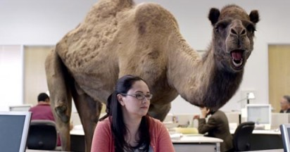geico-happier-than-camel
