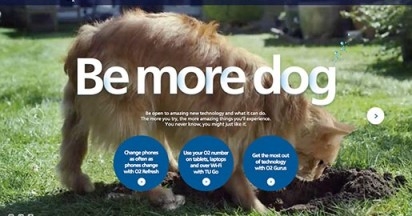 be-more-dog