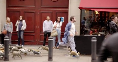 moneysupermarket-running-with-cats