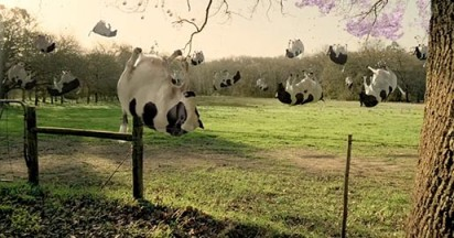 cadbury-bubbly-cows
