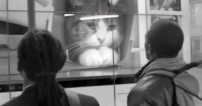 allan-gray-distractions-cat-video