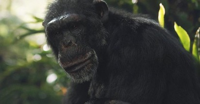 sky-tv-chimpanzee