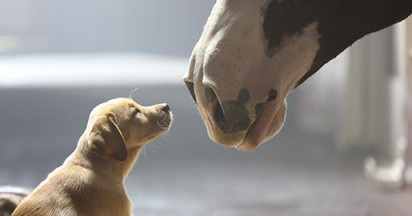 budweiser-puppy-love