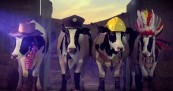 Anchor Cows Celebrate 125 Years