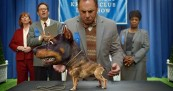 Audi Doberhuahua Call to Stay Uncompromised