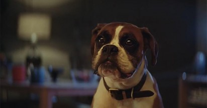 Buster the Boxer Bounces for John Lewis