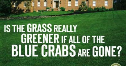 Chesapeake Club Spring Media Campaign Protects Blue Crabs