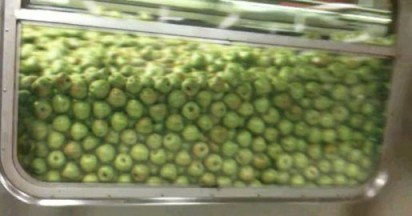 City Harvest Apples in New York Train