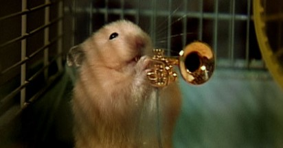 Drench Clever Hamsters Play Jazz