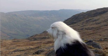 Dulux Dog Celebrates 50 Years