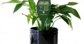 Earth Hour Fertilising Plant Spikes