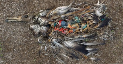 Endangered Wildlife Trust Trash Seabirds