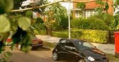 Ford SportKa Deals With Cat and Pigeon
