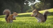 Kit Kat Squirrels